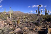 Brian Lockett - Snowy Four Peaks Gigapan...