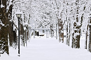 Lightposts Prints - Snowy lane in winter park Print by Elena Elisseeva
