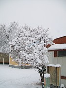 Jewel Hengen - Snowy Lilac