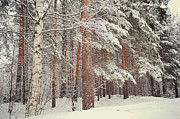 Winter Scene Metal Prints - Snowy Memory of the Woods Metal Print by Jenny Rainbow