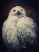 Birds Of Prey Mixed Media Prints - Snowy Owl Print by Angela Doelling AD DESIGN Photo and PhotoArt