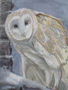 Bird Of Prey Art Paintings - Snowy Owl by Callie Smith