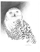 Snowy Drawings - Snowy Owl by Sarah Glass