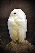 Owl Photo Metal Prints - Snowy owl vintage  Metal Print by Jane Rix