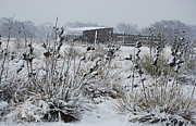 Winter Scenes Rural Scenes Prints - Snowy Pasture Print by Melany Sarafis