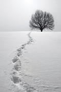 Black Tree Posters - Snowy Path Poster by Diane Diederich