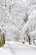 Snow Scene Metal Prints - Snowy Path Metal Print by Emily Stauring