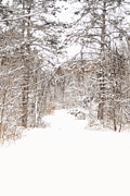 Snow-covered Landscape Digital Art Posters - Snowy Path Poster by Mary Timman