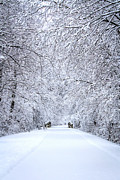 Snow On Road Posters - Snowy Path - Paintography Poster by Dawn M Smith