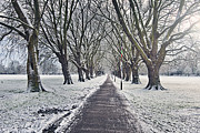 Snowy Path Through Jesus Green In Cambridge Uk Print by Justin Paget