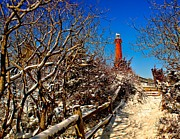Barnegat Light Posters - Snowy Path to Barnegat Light Poster by Nick Zelinsky