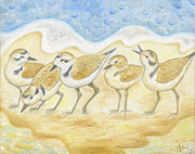 Shorebird Paintings - Snowy Plovers by Annamarie Lombardo