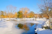 Pond In Park Prints - Snowy Pond Print by Diana Angstadt