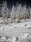 Snow Scene Metal Prints - Snowy Silence Metal Print by Chris Brannen