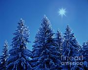 Hermann Eisenbeiss - Snowy Spruces