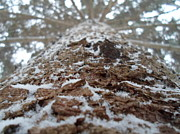 Snowy Tree Print by Jenna Mengersen