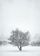 Winter Storm Framed Prints - Snowy Tree Framed Print by Scott Norris