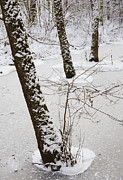 Snow-covered Landscape Art - Snowy trees in frozen pond - winter forest by Matthias Hauser