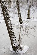 Snowy Trees In Frozen Pond - Winter Forest Print by Matthias Hauser