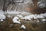 West Fork Oak Creek Canyon Posters - Snowy West Fork Poster by Peter Coskun