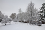 James BO  Insogna - Snowy Winter Landscape View