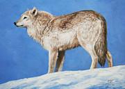 Crista Forest - Snowy Wolf