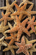 Sea Life Art - So many starfish by Garry Gay