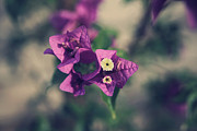 Purple Flowers Photos - So Real That it Makes Me Wanna Cry by Laurie Search