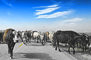Cattle Drives Prints - So this is what Farm to Market Road means - Desaturated Print by Gary Holmes