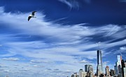 Flying Seagulls Framed Prints - Soar Over New York City Framed Print by Dan Sproul