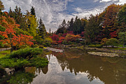 Japanese Garden Posters - Soaring Autumn Colors in the Japanese Garden Poster by Mike Reid