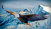 Soaring Bald Eagle Print by Gary Keesler