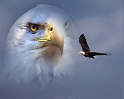 Mary Almond Prints - Soaring Eagle Print by Mary Almond