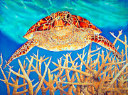 Sea Turtle Tapestries - Textiles Posters - Soaring over Staghorn Poster by Daniel Jean-Baptiste