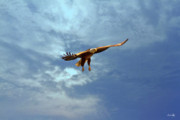 Pierre Photo Prints - Soaring Print by Scott Pellegrin