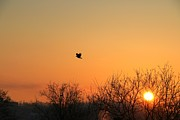 Jay Nodianos - Soaring Sunrise 1