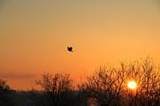 Soaring Sunrise 1 Print by Jay Nodianos