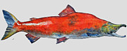 Salmon Paintings - Sockeye salmon by Juan  Bosco