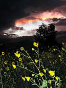 Socorro Sunset Print by Steven Ralser