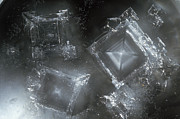 Caustic Prints - Sodium Hydroxide Crystals Print by Charles D Winters