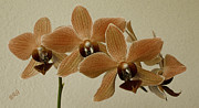 Brown Tones Prints - Sofia Orchid Print by Ben and Raisa Gertsberg