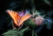 Tiger Fractal Photos - Soft as Silk Fractal by Shelle Ettelson