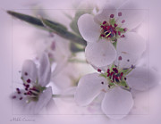 Mikki Cucuzzo Framed Prints - Soft blossoms Framed Print by Mikki Cucuzzo
