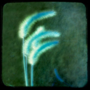 Grass Digital Art - Soft Blue Grass by Gothicolors And Crows