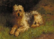 Domestic Metal Prints - Soft Coated Wheaten Terrier  Metal Print by Alfred Duke