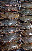 Wildlife And Nature Photos Art - Soft Crabs by Skip Willits