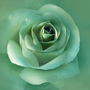 Green Florals Prints - Soft Emerald Green Rose Flower Print by Jennie Marie Schell