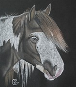 Black Horse Pastels Prints - Soft Paint Print by Stephanie L Carr