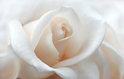 Peach Rose Photos - Soft Peach Rose Flower by Jennie Marie Schell