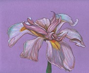 Botanic Drawings - Soft Petals by Paul Gioacchini